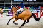 rennend-paard