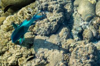koraalrif Eilat